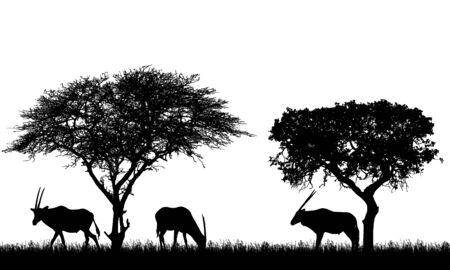 Illustration of African landscape on safari with antelopes or gazelles under tropical trees. Animals graze on the grass. Isolated silhouettes on white background - vector Vektorgrafik