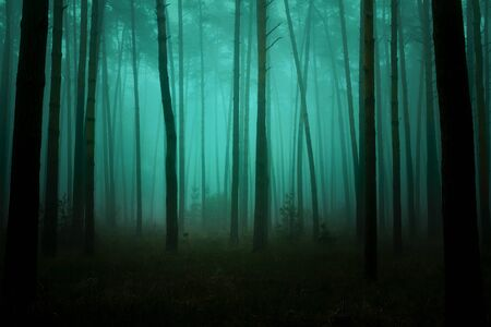 Photo of fairytale forest with pine trunks, a footpath and a morning spring mist.