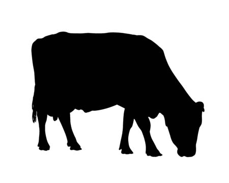 Black realistic silhouette of a grazing cow - isolated on white background - vector