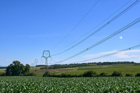 Agricultural landscape and corn field with electric poles and high voltage wires in South Moravia in the Czech Republic. Blue summer sky and space for text.