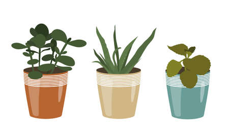 Set illustrations of houseplants in colorful pots isolated on white background - vector
