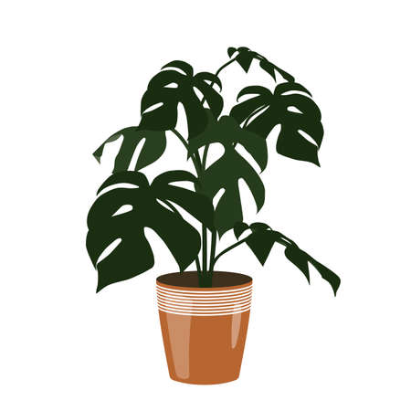 Flat design illustration of houseplant in a brown pot. Green Monstera isolated on white background - vector