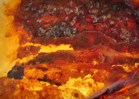 millions: Baltic amber, resin segments, fossil millions of years