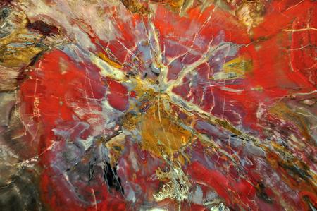 Versteend hout agglomeraat gepolijst knippen