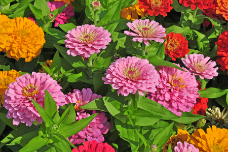 Garden with multicolored gorgeous flowers