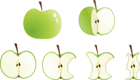 apple evolution from whole to stub illustration