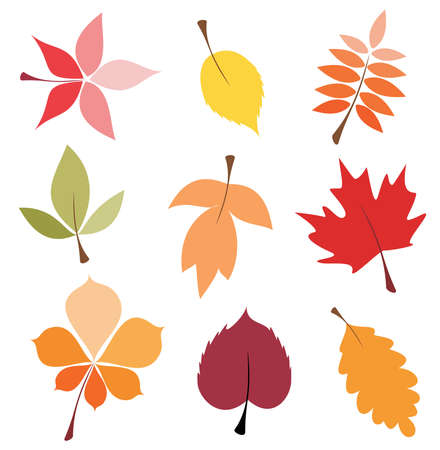 yellow leaves: autumn leaves set, isolated vector illustration