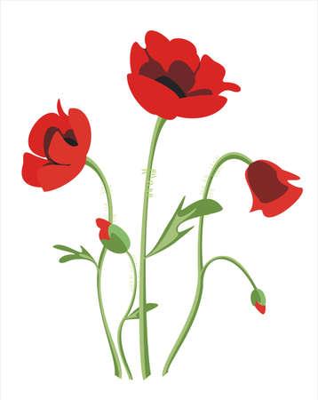 poppy leaf: poppy flowers isolated illustration