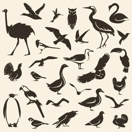 Birds big collection, stylized vector silhouettes, wildlife template