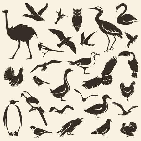 Grande collection d'oiseaux, silhouettes vectorielles stylisées, modèle de la faune