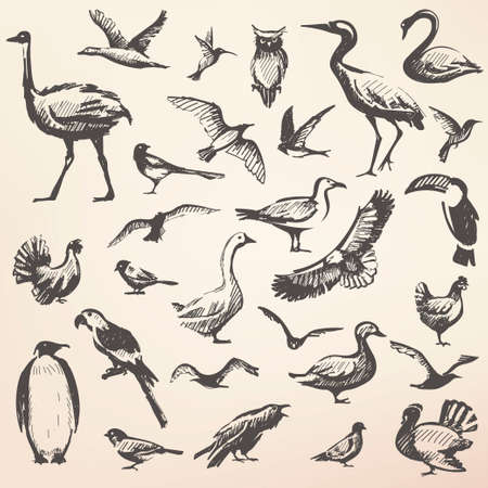 Birds big hand drawn collection, vector silhouettes in sketch style, wildlife template
