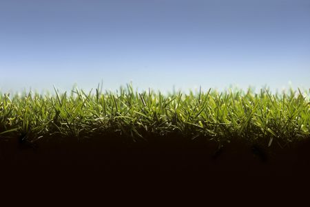 Cross section of lawn showing blades of grass at ground level Archivio Fotografico