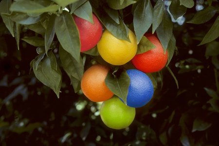 bunch of multicolored oranges hanging on a tree in a grove. Colors include , blue, green, orange, red, purple and yellow.