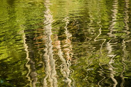 distort: Abstract rippled reflection of trees in lake water. Would make a good background.