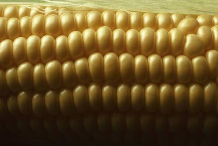 Close-up de grains de maïs doux jaune Banque d'images - 11819126