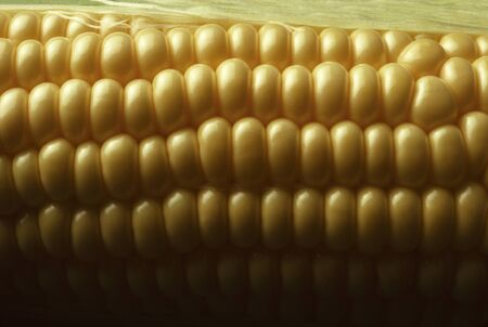 shuck: Close-up of Kernels of Yellow Sweet Corn