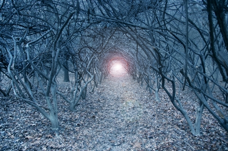 tunnel portals: Surreal arch-like trees in a muted grayish dreamlike woods