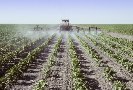 sprayer: Crop sprayer spraying young cotton plants in a field in the San Joaquin Valley, California Stock Photo