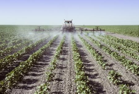 pulverizador: Pulverizador pulverizar las plantas jóvenes de algodón en un campo en el Valle de San Joaquín, California Foto de archivo