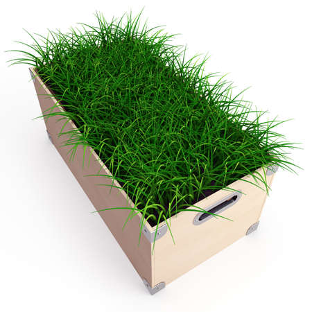 overgrown: A wooden box with grass isolaten on white