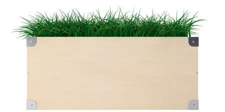 Wooden container with green fresh grass isolaten on white background photo