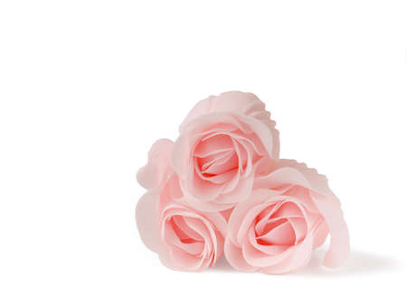 pink roses on white background Stock Photo - 8845471
