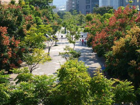 beautiful  sidewalks and thriving trees