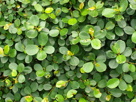 a cluster of green circular leaves