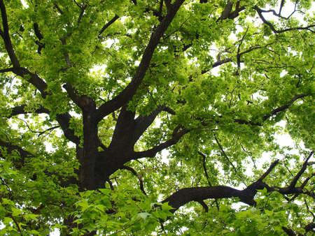 beautiful tree in spring morning Stock Photo