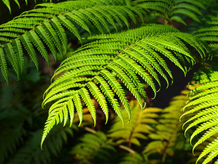 green leaf under morning Light