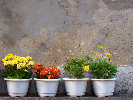 beautiful flower of four pots   Stock Photo