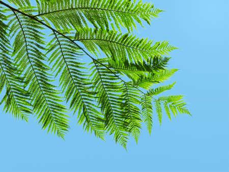 green fern leaf against blue sky  Stock Photo - 8931272