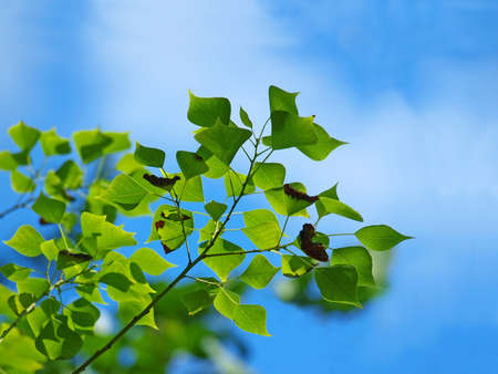 leaves and branches against blue sky Stock Photo - 8931261