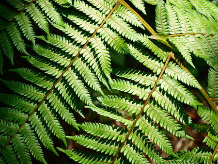 green leaves of fern under sunlight