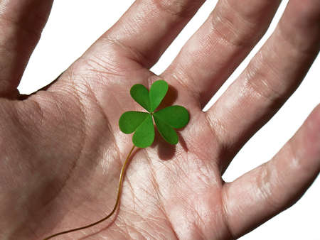 Green clover on the palm under sunlight Stock Photo - 16840143