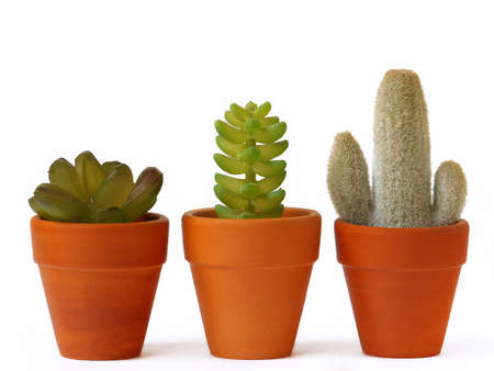 Pots of cactuses on white background