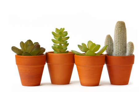 Pots of cactuses on white background  Stock Photo