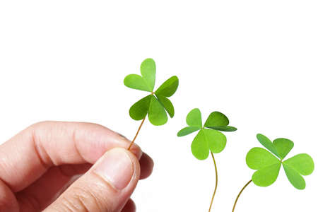 Male hand holding a clover on white background