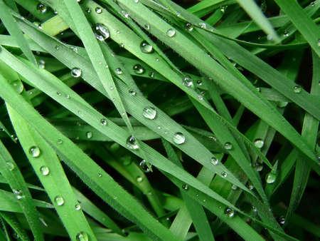 Raindrops on grass photo