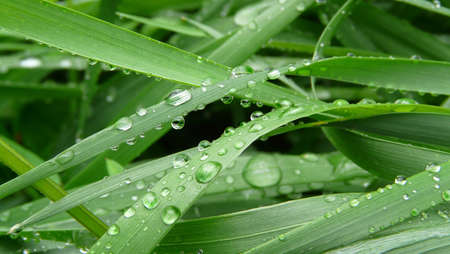 Raindrops on grass Stock Photo - 5298831