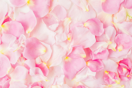 Pink rose petals. Flat lay, top view. Valentines day background.