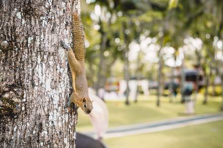 Chipmunk on tree, wild animal in tropics Foto de archivo
