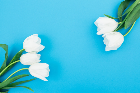 Floral frame of white tulips on blue pastel background. Flat lay, top view. Spring background.