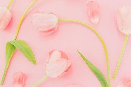 Floral pastel background with tulips. Flat lay, top view. Spring time background.