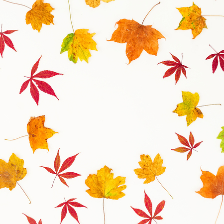 Autumn frame of fall yellow and red leaves on white background. Flat lay, top view. Stock Photo