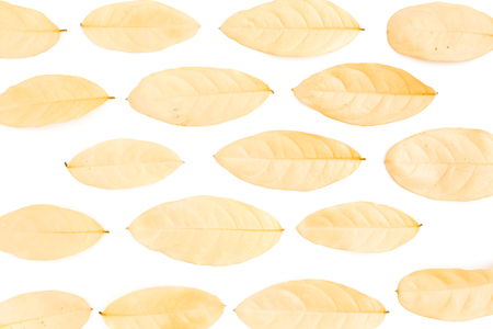 Autumn composition made of yellow dried leaves on white background. Flat lay, top view. Close up view