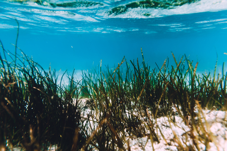 Tropical ocean with sand and sea weed is underwater. Indian ocean. Stock Photo