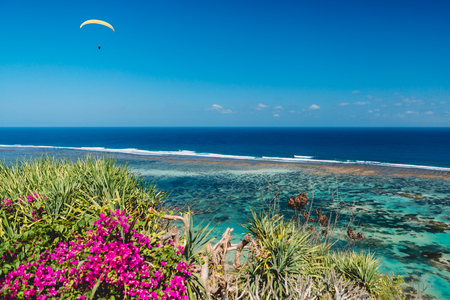 Tropical coast and blue ocean with paraglider in tropical island. Pink flowers and palms at shoreline