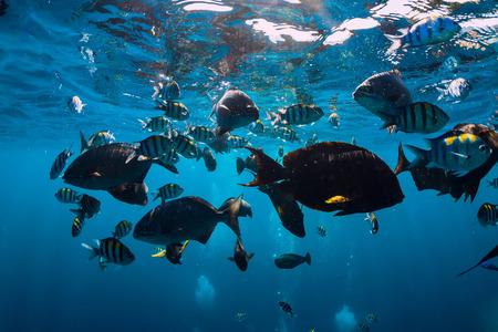 Monde sous-marin avec des poissons tropicaux dans l'océan Indien Banque d'images