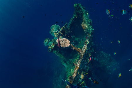 Beautiful underwater world with corals and tropical fish. USS Liberty Wreck, Bali 写真素材
